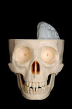 Half-Brained Skull. A half-brained funny-looking plastic skull, on a black background stock images