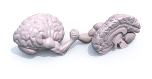 Half brains that make arm wrestlin Stock Photos