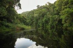 Half collared kingfisher trail Stock Photography