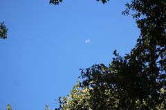 Half Crescent Moon at the Woods royalty free stock photos