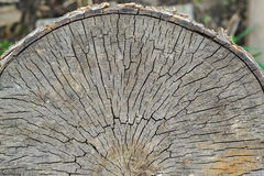 Half cut down the old tree trunk top view Royalty Free Stock Images