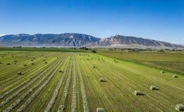 Half Cut Field of Hay Royalty Free Stock Photos