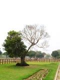 Half Dead Tree stock photos