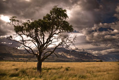Half dead tree in stormy valley Royalty Free Stock Image