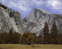 Half Dome. Yosemite Half Dome from the valley floor Royalty Free Stock Image