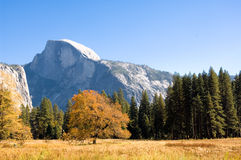 Half Dome and english elm Royalty Free Stock Photography