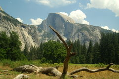 Free Half Dome From Meadow Stock Images - 1150754
