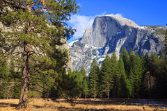 Half Dome Scene. View of Half Dome from a meadow in Yosemite National Park, California Stock Photography