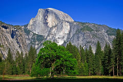 Half Dome from Yosemite Valley floor royalty free stock image
