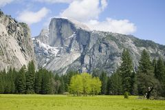 Half Dome - Yosemite. View of half dome from meadow in yosemite national park california usa royalty free stock photo