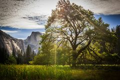 Half Dome and Yosemite  Valley in Summer Time. Backlit view of Yosemite Valley and Half Dome in summer time morning Royalty Free Stock Images