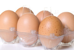 Half Dozen Brown Eggs in Clear Plastic Container Stock Images