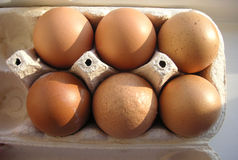 Half a dozen eggs in a box Royalty Free Stock Photo