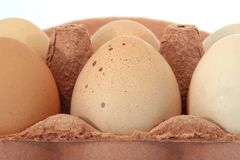 Half a Dozen Free Range Hens Eggs in Box. Close up of six large free range chicken/hens eggs in their box on a white background stock images
