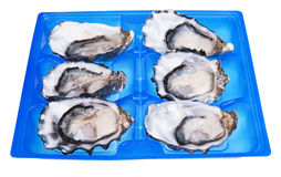 Half a dozen oysters Stock Photos