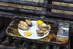 Half a dozen oysters on a plastic plate Royalty Free Stock Photography