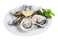 Half a dozen oysters Stock Photography