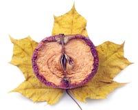 Half of dried apple Stock Image
