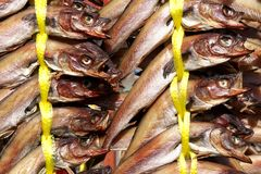 Half-dried pollock strung together at the market. Half-dried pollock strung together at a Korean local market - these fish are called myeong tae in Korean stock image