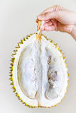 Half Durian in Hand. Half of a durian fruit held by the stem by the hand of a young woman. Edible part and seeds visible Royalty Free Stock Photo