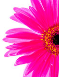 Half a flower Stock Image
