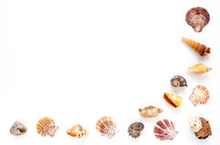 Half Frame of Seashells on White Background Royalty Free Stock Images