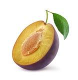 Half of fresh plum Stock Images