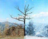 Half frozen landscape