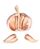 Half of garlic Stock Photos