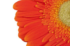 Half of gerberas Stock Image