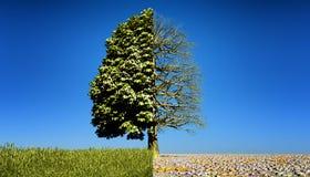 Half green half bare tree. royalty free illustration