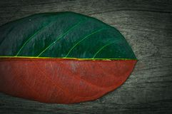 Half green and half dry autumn leaf on wood background stock image