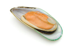 Half of green mussel Stock Photography