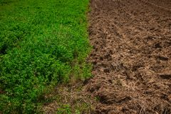 Half green wheat field in the spring sun and half unworked land stock image
