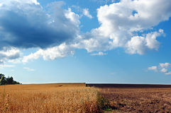 Half-harvested field under cloudy blue sky Stock Images