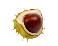 Half horse chestnut. Split in half prickly fruit of the horse chestnut royalty free stock photos