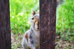 A half innocent squirrel`s face. stock photo