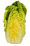 Half a Little Gem lettuce. Stock Photo