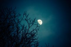 Half moon over winter pine tree tops stock images