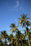 Half moon with palm trees Royalty Free Stock Image