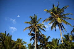 Half moon with palm trees Royalty Free Stock Photo