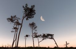 Half Moon and Silhouette of Trees stock photos