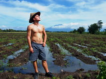 Half Naked Farmer On The Rice Field. Half naked man standing on the rice field and looking to the sun Stock Photography