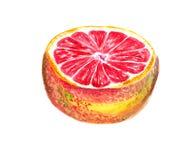 Half og grapefruit Stock Images