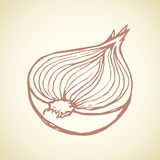 Half of onions. Vector drawing Royalty Free Stock Photography