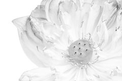 A half of open lotus flower. Blossom Royalty Free Stock Photos