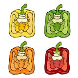 Half of Orange, Yellow, Green, Red Paprika, Bell Pepper or Sweet Pepper. Hand Drawn Sketch Vector Illustration. Isolated Royalty Free Stock Photos