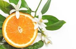 Half Oranje die Fruit met bladeren en bloesem op witte rug wordt geïsoleerd Royalty-vrije Stock Fotografie