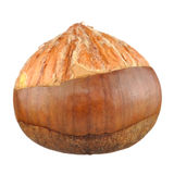 Half Peeled Chestnut Isolated on White Background Royalty Free Stock Photography
