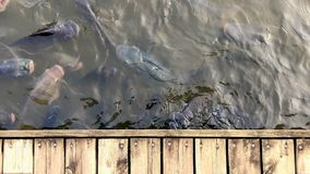 Half plank and the fish in the river as a background. Stock Photography